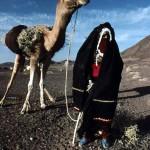Bedouin shepherdess and camel mount